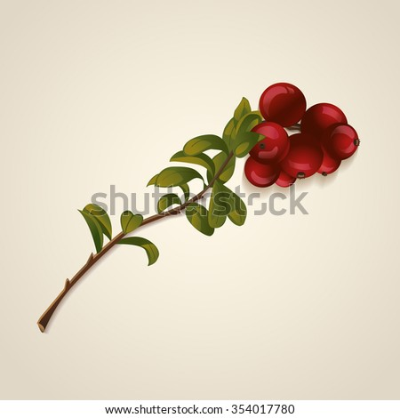 Cranberries with green leaves. Vector illustration