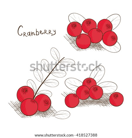 Cranberry. Tone images. On a white background. Sketch. Set