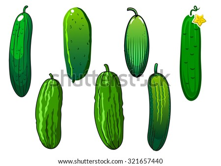 Crispy cucumber vegetables with prickly green skin and yellow flower, isolated on white background, for agriculture or vegetarian food themes - stock vector