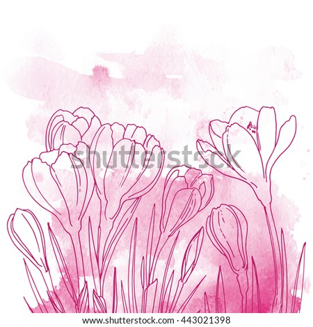 Crocuses Flowers Line Drawn On Watercolor Stock Vector