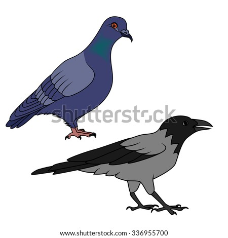 Crow and pigeon illustration - stock vector