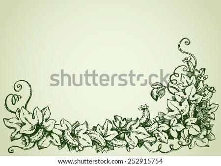 Cucumber is  family Cucurbitaceae. Vine with fruits, flowers, lush foliage, curled tendrils. Vector monochrome freehand ink drawn background sketchy in scrawl style pen on paper with space for text - stock vector