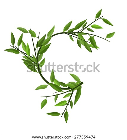 Curved Round Branch Bamboo with Green Leaves with Space for Text - vector - stock vector