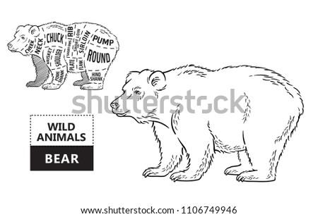 Bear Cuts Diagram Radio Wiring Diagram