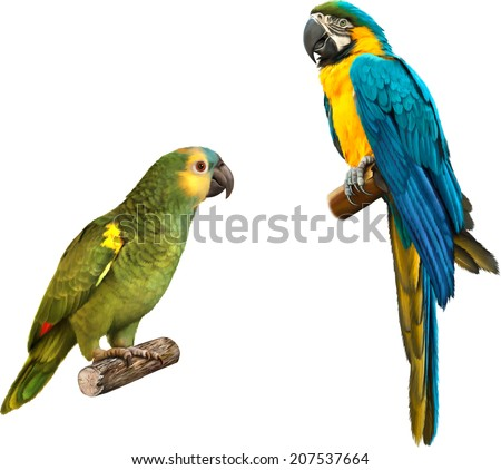 Cute Beautiful green Parrot, Colorful blue parrot macaw illustration isolated on white background - stock vector