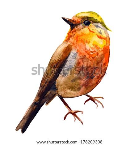 Cute birds for your design. watercolor - stock vector