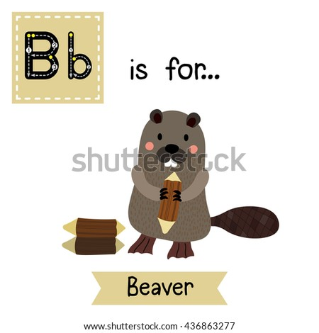 Cute children zoo alphabet B letter tracing of standing Beaver holding a log for kids learning English vocabulary.