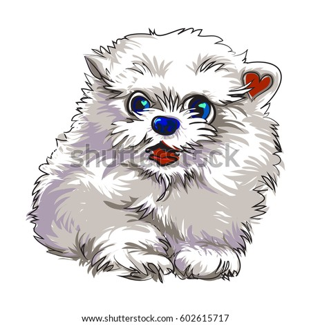 cute dog pomeranian
