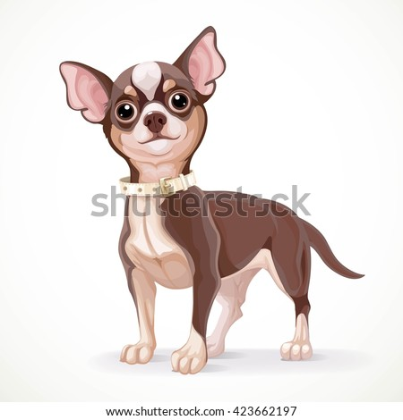 Cute little dark chihuahua dog vector illustration isolated on white background