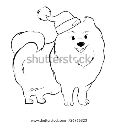 Red Colored Pomeranian Dog Stock Images, Royalty-Free Images ...