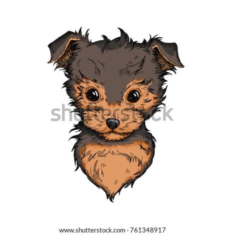Yorkie Puppy Drawings 56596 Loadtve