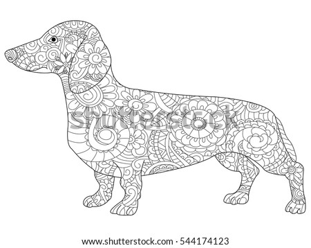 Dachshund Coloring Book Adults Vector Illustration Stock Photo