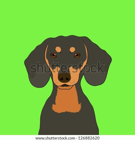 Dachshund, The buddy dog - stock vector