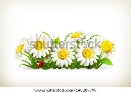 Daisies in grass, vector - stock vector