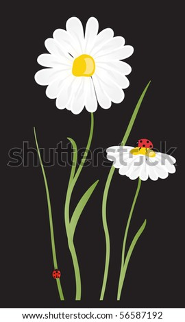 Daisy flowers - stock vector