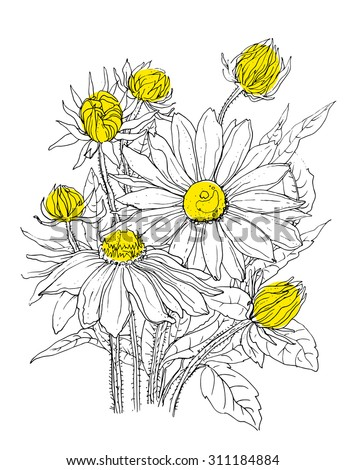 Daisy flowers in bouquet. Botanical outline Illustration. Illustration for greeting cards, wedding invitations, and other printing projects. - stock vector