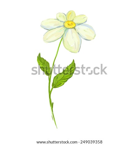 daisy Vector illustration  hand drawn  painted watercolor  - stock vector