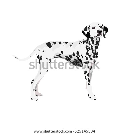 dalmatian dog at one color background