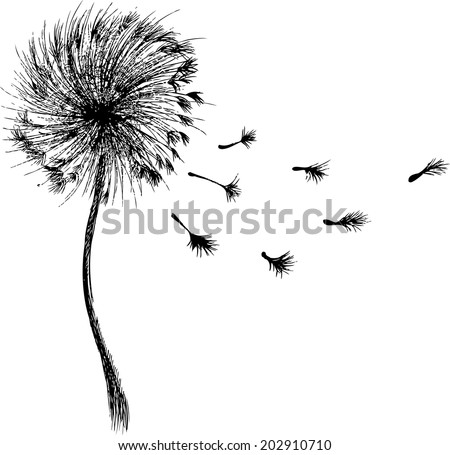 dandelion, dandelion vector, dandelion silhouette - stock vector