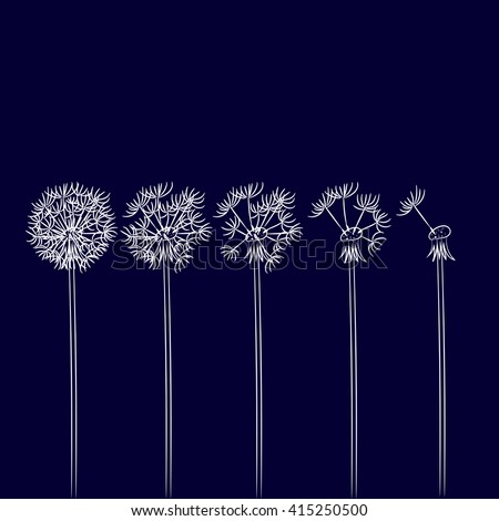 Dandelion in the wind scatters