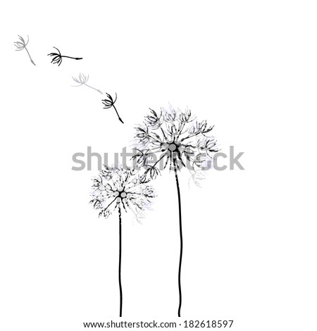 dandelion on a white background. Vector