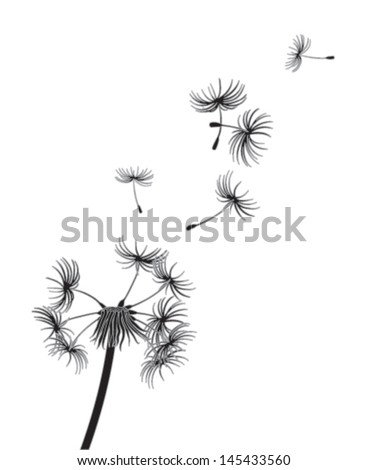 Dandelion seeds blow in the wind
