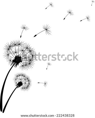 Dandelion silhouette - stock vector
