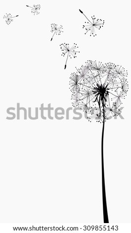 dandelion silhouette in the wind