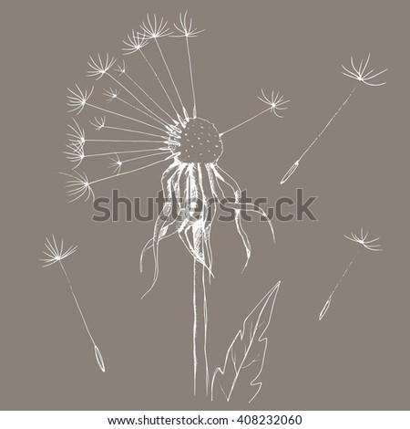 dandelion sketch, ink floral ornament with flowers dandelion and leaves, hand drawing blowball, white blowball isolated on grey background, vector illustration
