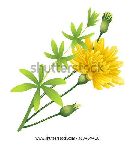 Dandelion. Spring flower. - stock vector