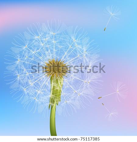 Dandelion. Vector. - stock vector