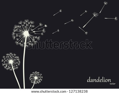 Dandelion Vector.Illustration - stock vector