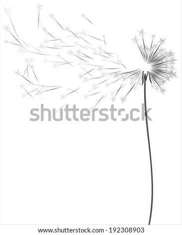 dandelion .Vector isolated on white background