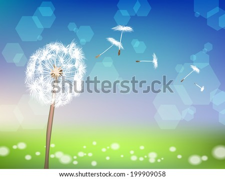 dandelion with pollens on green grass background