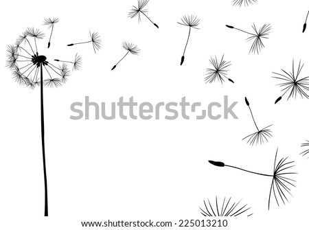 dandelions flying in the wind - stock vector