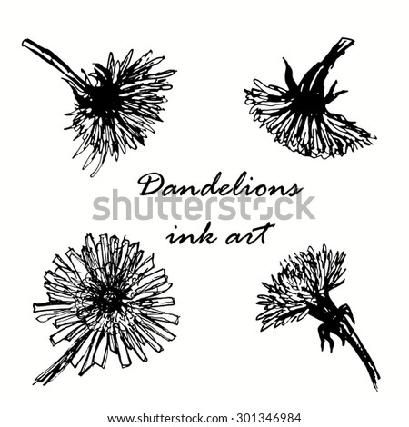 dandelions ink hand drawn sketch vector illustration - stock vector