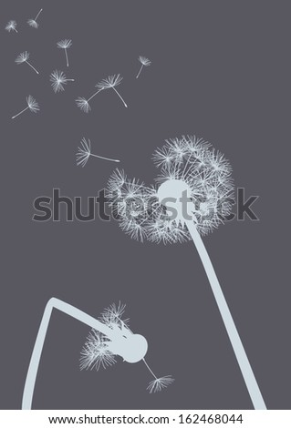 dandelions on grey background- one with broken stalk