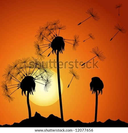 dandelions on sunset (for more see my port) - stock vector