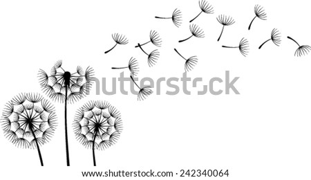 Dandelions on the white background - stock vector
