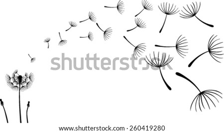 Dandelions on the white background. Vector