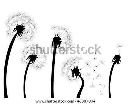dandelions silhouettes - stock vector
