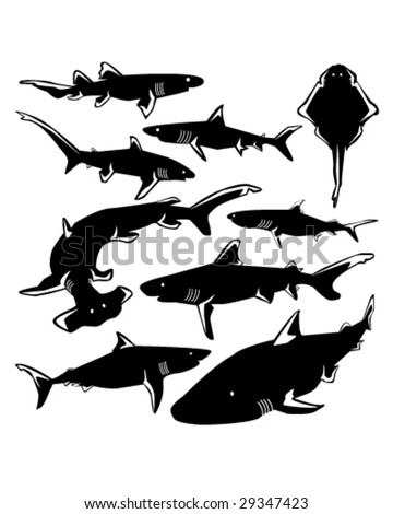 Dangerous sharks in vector silhouette with stylized illustration - stock vector