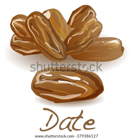 Date fruit. Dry date fruit isolated. Vector illustration.
