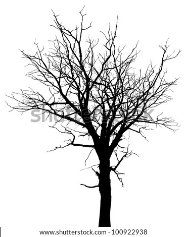 Dead tree silhouette. Vector old dry oak crown without leafs isolated on white - stock vector