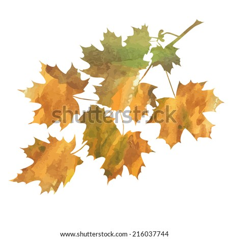 decorative  branch of maple isolated on white background. vector illustration  - stock vector