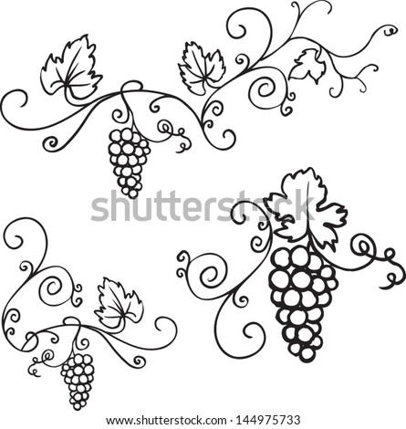 Decorative Grapes Vine Vector Ornament