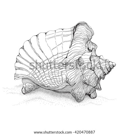 Decorative pen and ink style drawing of big conch shell on sand