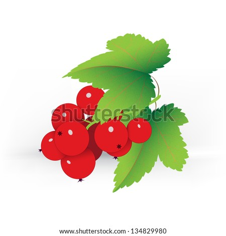 decorative red currant on white background - stock vector