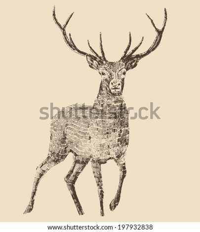 deer engraving style, vintage illustration, hand drawn - stock vector