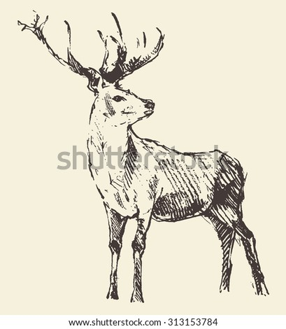 Deer engraving style, vintage illustration, hand drawn, sketch - stock vector